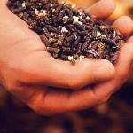 Семена и удобрения для вашего сада