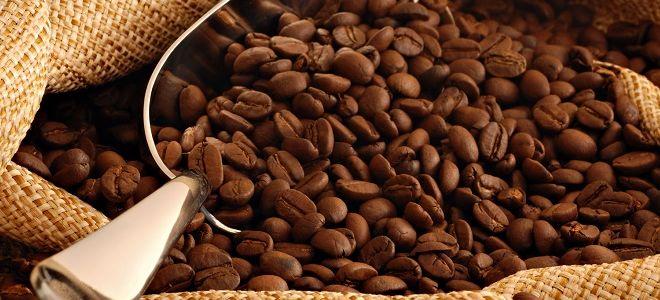 Кофе в зернах – вкус и аромат подаренный природой